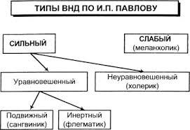 Деятельность коммуникативная это что такое Деятельность  Типы высшей нервной деятельности по И П Павлову