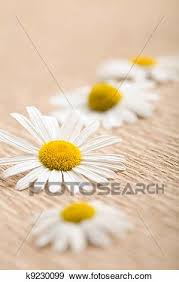 Recycled Flower Paper Camomile Flower Over Recycled Paper Ecological Background Stock Photo