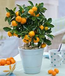 Easiest Houseplants You Can Grow Without Care  Garden  Pinterest Indoor Fruit Trees Low Light