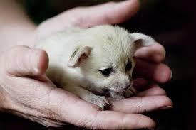 newborn fennec fox. Plain Newborn Intended Newborn Fennec Fox B