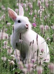 White Rabbit HD Wallpapers - Wallpaper Cave
