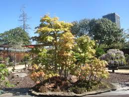 bonsai garden at lake merritt oakland