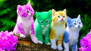 Nhạc Thiếu Nhi Vui Nhộn Cho Bé Ăn Ngon- Chú Mèo Con Xuân Mai -Ai Cũng Yêu Chú  Mèo - YouTube