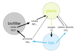 Unionized Ammonia Chart Fish Ammonia What You Need To Know To Keep Fish Healthy