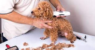 can you use human clippers on dogs
