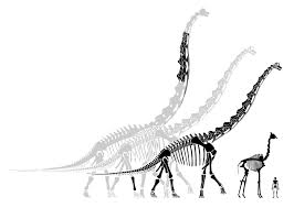 brachiosaurus size brachiosaurus both bigger and smaller than you think sauropod