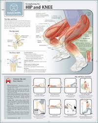 Strengthening The Hip Knee Chart Paper