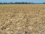 Images & Illustrations of crop residue