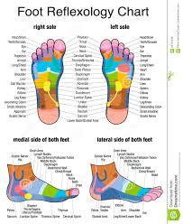 Reflexology Plantar Sole Profile Feet Stock Vector