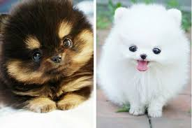 cute animal. Fine Animal What Happens In Our Brains When We Look At Cute Animal Pictures  Cuteness And R