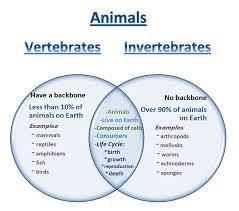 Learning Ideas - Grades K-8: Venn Diagram - Vertebrates and ...