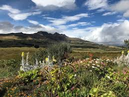 the secret garden in cotopaxi sits at 3 500m above sea level that is something they omitted to mention whilst coming into the van upon leaving the van