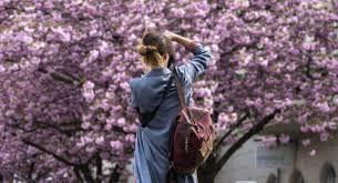 Bunga Sakura Kamu Perlu Tahu Ini 4 Manfaat Bunga Sakura Untuk Kecantikan