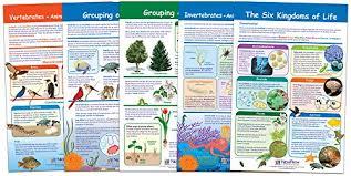 6 Kingdoms Of Life Chart Amazon Com Newpath Learning 94 3502 The Six Kingdoms Of