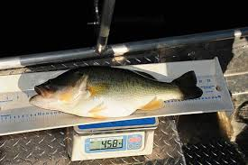 Tracking The Tiger Tiger Bass And Their Growth In The Southeast
