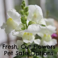 ... Pet Safe Fresh, Cut Flowers Options