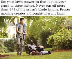 Lawn Care Bluegrass Greensource