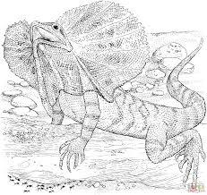 Coloriage L Zard Collerette Dragon D Australie Coloriages
