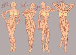 17 best images about reference illustrations leg 17 best images about reference illustrations leg anatomy planes and nose drawing