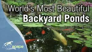 Backyard Ponds Worlds Most Beautiful Backyard Ponds Youtube
