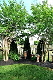 Best 25 Privacy Landscaping Ideas On Pinterest  Backyard Trees Good Trees For Backyard