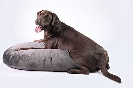 designer dog bed furniture. Our New Designer Dog Bed Comes In 5 Of Classic Collection Colors, Using The Same Fabric As Loungers. Because Covers Are Made With Furniture