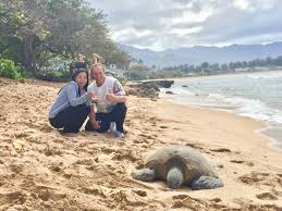 The Hottest Spots To See Sea Turtles In Hawaii And You