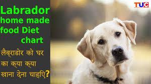 Labrador Homemade Food Diet Chart Dog Tips Tuc Xeanco Blog
