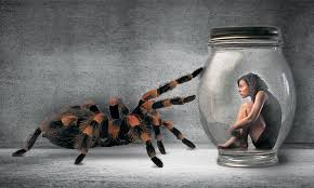 essay on fear can you overcome your fears