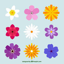 colored pictures of flowers.  Pictures Variety Of Pretty Colored Flowers Free Vector And Colored Pictures Of Flowers Freepik