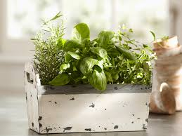 Indoor Kitchen Herb Garden Kit Garden Design Garden Design With Kitchen Herb Gardens And Salad