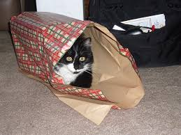 Image result for cats and wrapped presents