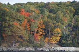 Downeast Tide Chart Fall Foliage On Bar Island Shoreline Picture Of Land