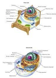 เซลล์ของสิ่งมีชีวิต - ชีววิทยา