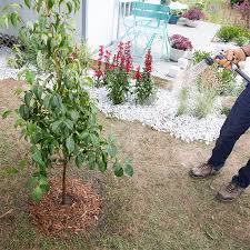 how to plant garden. watering the planting area. how to plant garden