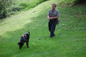 Hunters Win With Legalization Of Leashed Tracking Dogs News