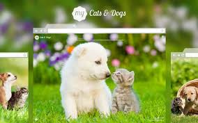 cute cats and kittens wallpapers. Exellent Kittens For Cute Cats And Kittens Wallpapers S