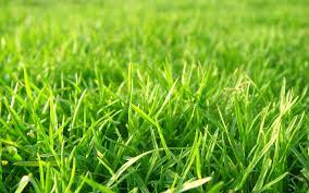 Grass Backgrounds Free