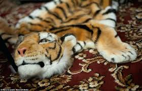 the tiger skin rug a faux fur rug in the only fools living room antique tiger the tiger skin rug