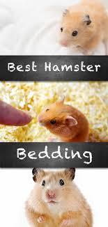 dwarf or syrian hamster bedding reviewed
