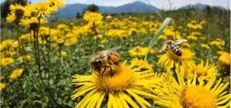 نتیجه تصویری برای زنبور در باغ