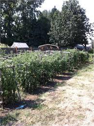 fort smith farm garden by owner craigslist