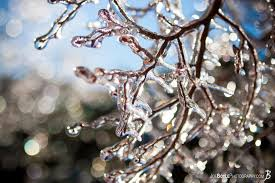 Tree Branches Covered With Ice