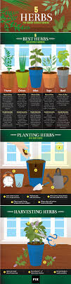 Kitchen Gardening Tips 5 Kitchen Herbs For Small Garden Spaces Fixcom