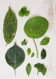 hojas verdes sobre fondo grunge foto