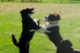 Πως προστατεύουμε το σκύλο στο πάρκο...