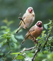 The Great Backyard Bird Watch HomeBackyard Bird Watch