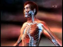 анатомия и физиология дыхательной системы реферат
