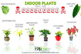houseplants for cats toxic plant container gardening poisonous to pets