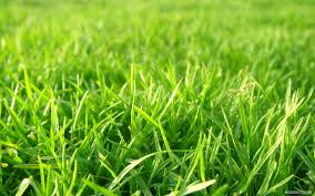 green grass football field. Green Grass Football Field